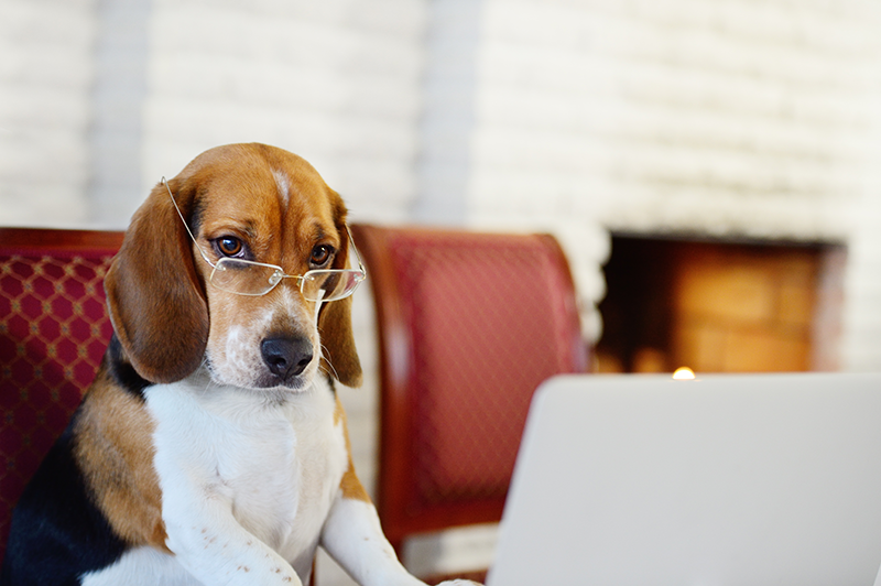 Industry Leaders Reveal Dogs in the Workplace Reduce Stress and Increase Happiness